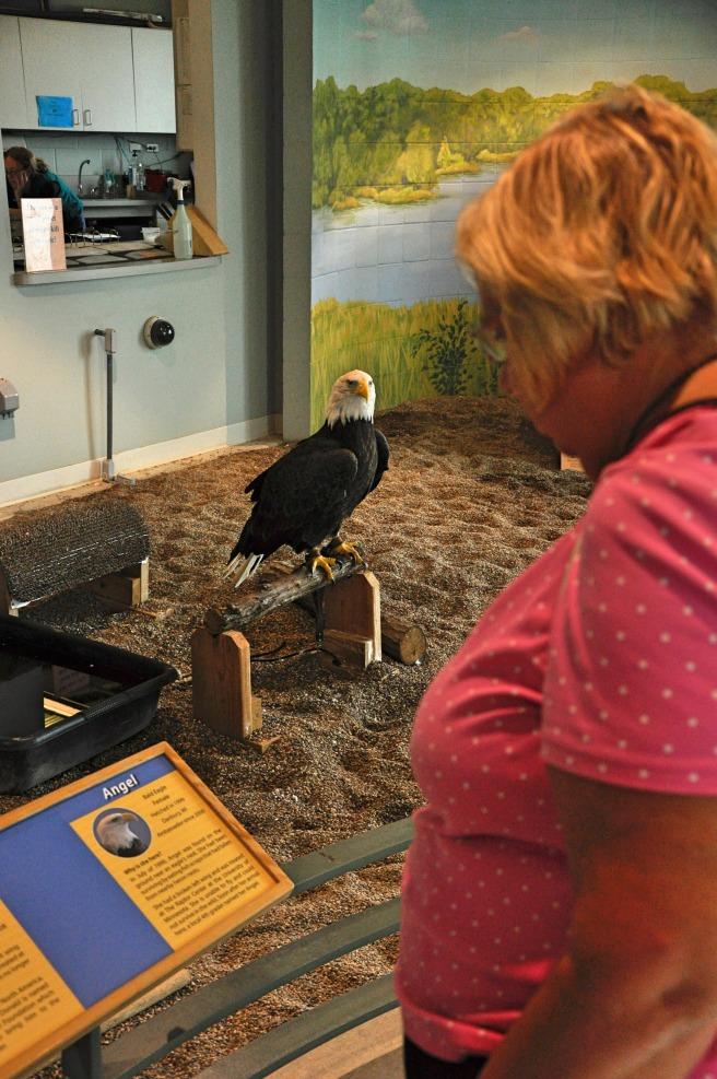 day-151-national-eagle-center-mn-5622_fotor