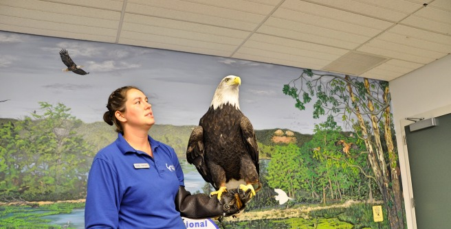 day-151-national-eagle-center-mn-5632_fotor