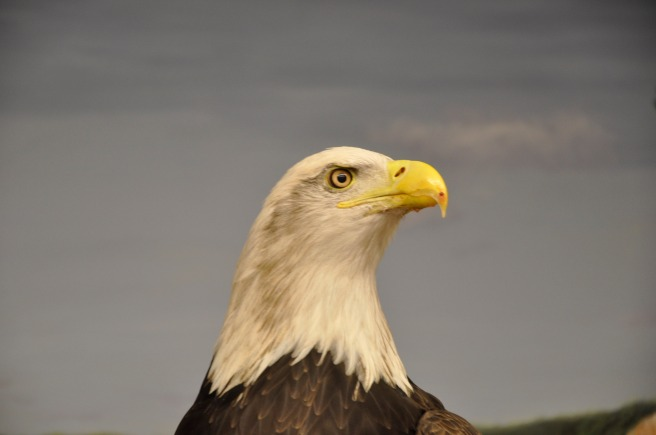 day-151-national-eagle-center-mn-5673_fotor