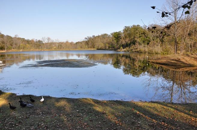 day-195-lake-of-the-ozarks-mo-7631_fotor