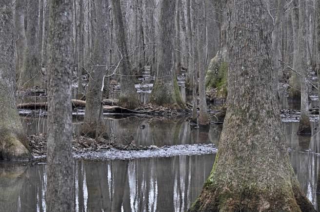 day-268-beaverdam-swamp-al-9765_fotor